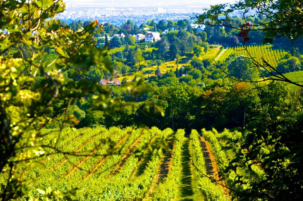 vienne-autriche-blog-voyage-vignes-khalenberg